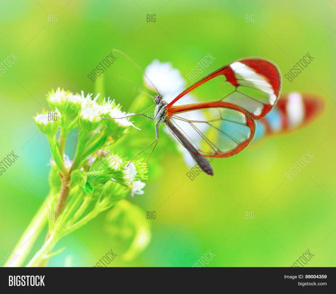 beautiful-butterfly-sitting-on-fresh-wild-flower-in-the-forest-89004359- bigstockphoto